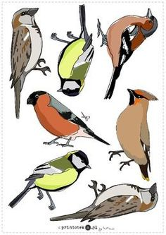 1 million+ Stunning Free Images to Use Anywhere Animals Name In English, Log Cabin Quilt Pattern, Animal Templates, Nature Activities, Free To Use Images, Bird Theme, Bird Crafts, Felt Birds, Fused Glass Art