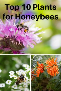 Honeybees play a vital role in pollinating plants around the world. In the United States alone, the survival of at least 150 food crops depend . Vegetable Garden, Garden Plants, Eco Garden, Landscaping Plants, Summer Garden, Honey Bee Flowers, Best Flowers For Bees, Bee Friendly Flowers, Mason Bees