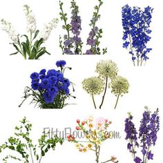 FiftyFlowers.com - Blue Blooming Spring Combo Pack