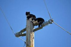 These two cats, stranded on top of a power pole, were rescued by a PG&E lineman.