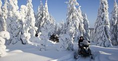 Snowmobile safaris in Rovaniemi and Ylläs - Finnish Lapland. Join us on one of our snowmobile excursions in Lapland.