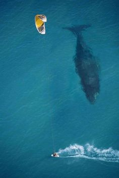 whale perfect timing photo 50 Pictures taken at the right time
