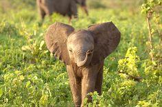 Baby elephant :)