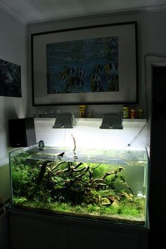 Layout by commandantp. #aquascaping