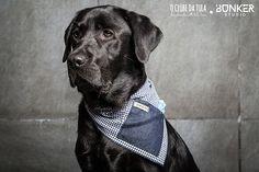 Congo and the Vichy blue navy/Jean Civic Dog® scarf, square pocket. http://civicdog.com/product/tuli-pañuelo-civic-dog-vichy-azul-marino-jean