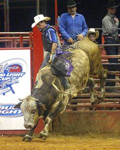 Professional Rodeo Bull Riding