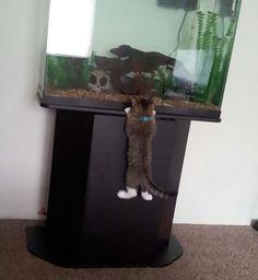 文字通り泥棒猫の画像