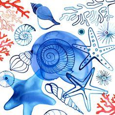 Shells by ©Margaret Berg www.margaretberg.com