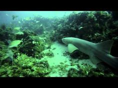 GoPro HD Scuba Diving Jupiter Florida - http://www.florida-scubadiving.com/florida-scuba-diving/gopro-hd-scuba-diving-jupiter-florida/