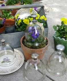 Garden cloche: Vintage beauty, under glass Laura Goines's cloches