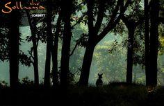Enjoy Wildlife & Jungle Safari at Jim Corbett National Park!! #Jimcorbett #sollunaresort #Resortsincorbett
