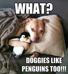 What? Doggies like penguins too!!!