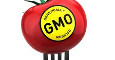 Nationen – Hva er egentlig problemet med GMO