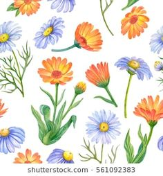 Seamless pattern of watercolor flowers, hand drawn illustration of chamomile and calendula flowers isolated on white background.
