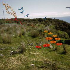 Back Stitch (Flying Geese) : Caroline McQuarrie Flying Geese, Back Stitch, Female Photographers, Landscape, Photography, Women, Punto De Cruz, Scenery, Photograph