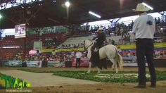 Cascos y riendas: Capitulo4: Caballo Criollo Colombiano, elegancia y distinción.