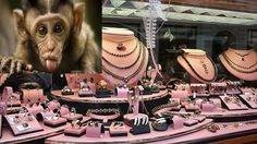 Jewelry Shop Robbed by Monkey in India