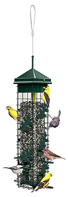 Brome 2004 Squirrel Wild Bird Feeder with 6 Feeding Ports, Seed Capacity, Free Seed Funnel >>> Be sure to check out this awesome sponsored product. Squirrel Proof Bird Feeders, Best Bird Feeders, Wild Bird Feeders, Bird Feeder Plans, Diy Bird Feeder, Pet Feeder, Wild Bird Food, Wild Birds, Small Garden Stakes