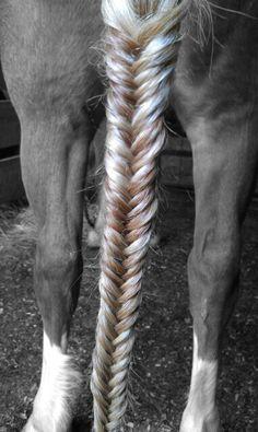 Fishtail braid on a horse's tail! #fishtailbraid #horse #horses