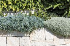 Beautiful soft textural planting on a coastal garden. Blue Chalk Sticks and Cotton Lavender Garden Spaces, Garden Beds, Garden Plants, Garden Walls, Garden Landscape Design, Landscape Walls, Coastal Landscaping, Garden Landscaping, Outdoor Plants