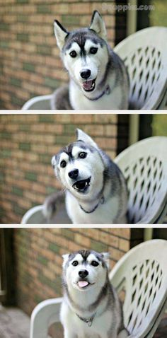 37 Funny Puns That Are So Bad They're Simply Hilarious Funny Puns used to be the most annoying things. Everyone would roll their eyes when they heard a funny pun. They were about as bad as dad jokes. everybody funny Dog Jokes, Corny Jokes, Funny Animal Jokes, Funny Dog Memes, Funny Animal Pictures, Cute Funny Animals, Animal Memes, Cute Dogs, Funny Quotes