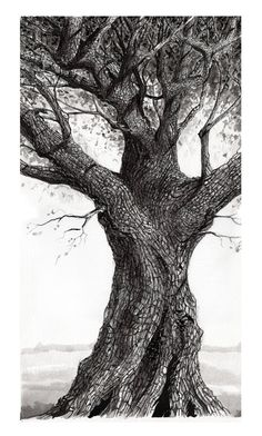 Thomas Haskett Illustration: Oak Tree, Heligan