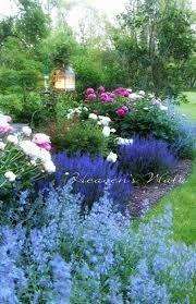 Image result for cottage garden blue flowers