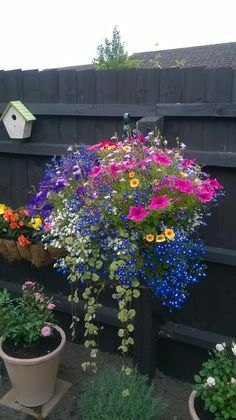 Container gardening, replicate this gardening post article reference 9986848438 to grow herbs in a pot. Plants For Hanging Baskets, Hanging Flowers, Flower Planters, Flower Pots, Container Plants, Container Gardening, Garden Design Pictures, Decoration Plante, Lawn And Landscape