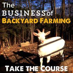 SHORT: Make Money Farming- 3 ways homesteaders can save and earn money from a small farm - Homesteady Backyard Farming, Chickens Backyard, Starting A Farm, Farm Business, Business Grants, Goat Care, Little Buddha, Homestead Farm, Garden Nursery