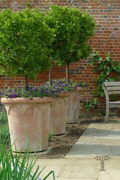 Large Terracotta Planters, Large Garden Planters, Small Backyard Gardens, Outdoor Planters, Back Gardens, Small Gardens, Garden Pots, Outdoor Gardens, Front Garden Landscaping