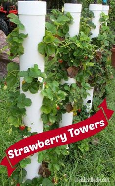 Grow your best strawberries EVER with DIY Strawberry Towers - If you don't have space in your garden or you want your berries up out of the dirt and bugs, grow strawberries vertically. Make gardening so much easier!