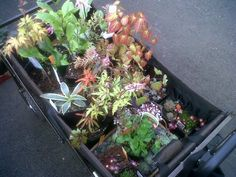 Wonder what a certifiable plant geek brings home from the biggest #plantsale in #Vancouver ? Take a peek into my cart!- Via the Dandelion Wrangler.