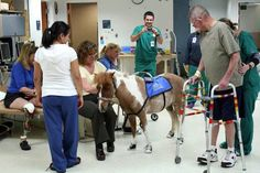 Sprout the Therapy Horse wears tiny tennies so he doesn't slip...