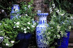 The Graceful Gardener's Containers | Blue and white grouping