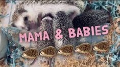 Mama feeding her babies Baby Hedgehog, Hedgehogs, Oils For Skin, Connection, Babies, Pets, Funny, Quotes, Quotations