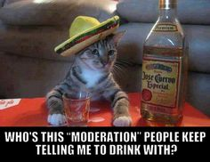 lickystickypickywe:    They have never been introduced….(h/t to suckthislemon!) Funny Cats, Funny Animals, Cute Animals, Crazy Cat Lady, Crazy Cats, Hate Cats, Georg Christoph Lichtenberg, I Hate Mondays, Cat Drinking