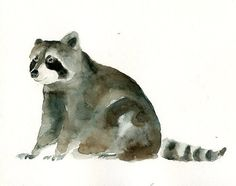these animal watercolors would be adorable framed in a little boys room...maye a collection of raccoon, squirrel (always my favorite), hedgehog, any of them!  So cute