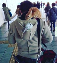 When traveling always bring your support system. #bunny #bunnies #bunnyfun #rabbit #rabbits #cuteanimal #cuteanimals #pet #pets