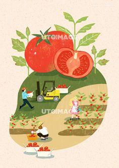 수확 012 SPAI380, 유토이미지, 일러스트, 생활, 수확, 농산물, 농수산물, 농사, 농업, 신선한, 직업, 농부, 농장, 자연, 오브젝트, 배경, 사람, 남자, 여자, 어른, 성인, 3인, 운반하는, 일하는, 물주는, 따는, 토마토, 단면, 채소, 야채, 작물, 잎, 식물, 재배, 밭, 흙, 지게차, 바구니, 물뿌리개, 행복, 미소, 농작물, 협동, 협업, 동료, 여름, 계절, 음식 Korean Illustration, Illustration Art Drawing, Business Illustration, Graphic Design Illustration, Farm Logo, Inspirational Artwork, Food Illustrations, Book Design, Retro