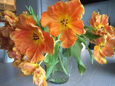 Interiør-tulipaner