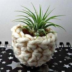 Air plants are fantastic plants for people who arent good with normal plants. They dont need soil, and only need to be watered about once a week, and then its just a quick mist and youre done. If youve got an air plant that you want to display in a classy way, this little white and