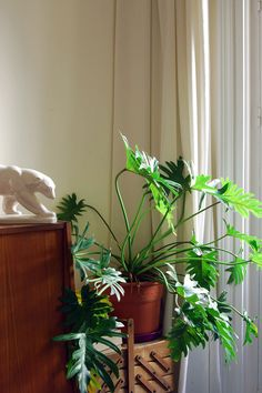 beautiful plant and natural light