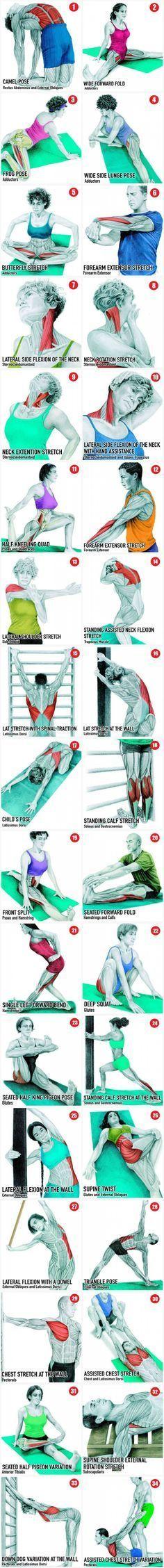 ૐ YOGA ૐ 34 Practicas de Yoga y Músculos Principales Comprometidos. A pesar de todo su nivel de salud, usted debería saber que llas Practicas de Yoga, son una rutina obligatoria antes y después de un entrenamiento.