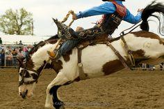 Cowboy-Rodeo-Saddle-Bronc-Rider-AR620517-238s.jpg (1000×664)