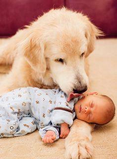 Animals - Babysitting
