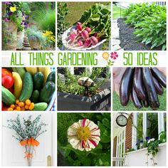 All Things Gardening - 50 Gardening Ideas