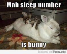 Mah Sleep Number Is Bunny