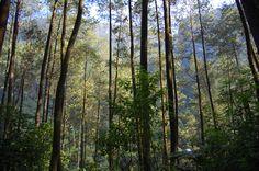 10 Lokasi Prewedding di Bandung - Taman Hutan Rakyat Juanda