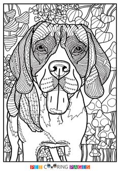 Free Printable Beagle Coloring Page Available For Download Simple And Detailed Versions Adults