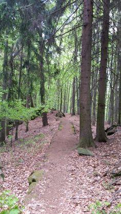 Jesenická 100 2016 Lovely forest trail